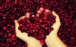 autumn-free-wallpaper-autumn-s-cranberry-heart_2560x1600_93128